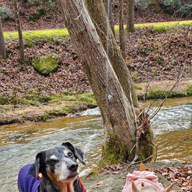 Mojo and Sweet Pea taking a break during a creek side hike.