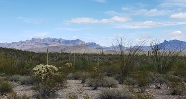 Organ Pipe Cactus/Twin Peaks Campground