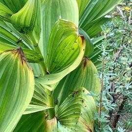 Nice foliage along the trail.