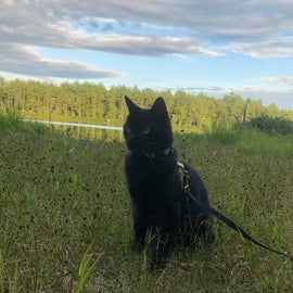 cat camping