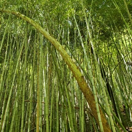 The Bamboo Park wasn't very far away and so unique.