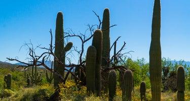 (DAY-USE ONLY) Sabino Canyon Recreation Area Cactus Ramada 2
