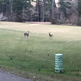 2 of the family of deer