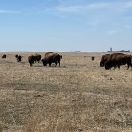 Bison spotted along the Mound Trail.