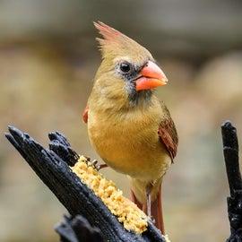 From Bird Blind
