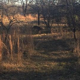 deer in the area