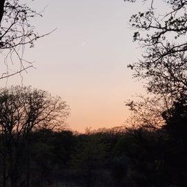 shooting star at sunset