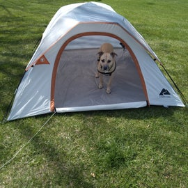 Guy checking out the tent.