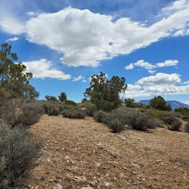 Beautiful sky and terrain, some small scrubby trees provide shade