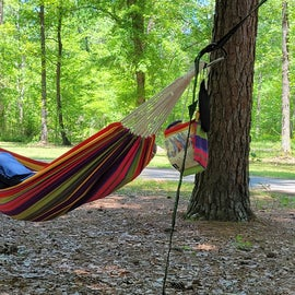 relaxing in the trees