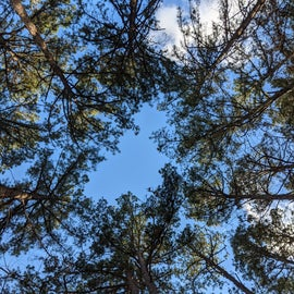 View of the trees from my campsite