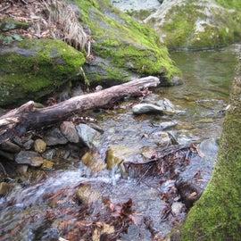 beautiful sights along trails