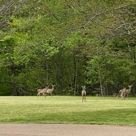Deer we saw almost everyday in Area B