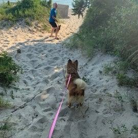 Path to Dog Beach