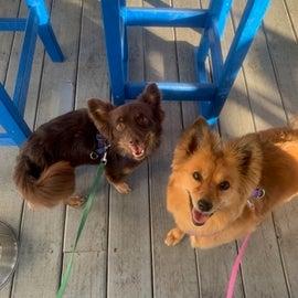 Dogs at the Tiki Bar