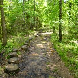 Stump walkway across muddy trail