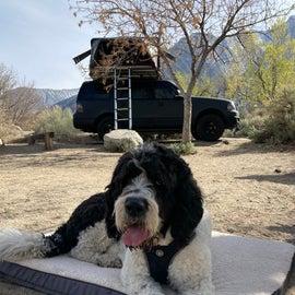 Bear loves camping!