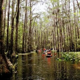 Tour group from Atlanta paddling through the Minnie's Lake area