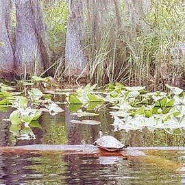 Turtles getting some sun