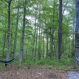 Nice clearing adjacent to our site with space for hammocks.