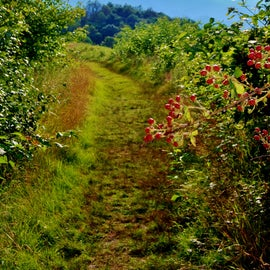 Later in the year, there will be lots of blackberries.  This was taken on a previous visit.