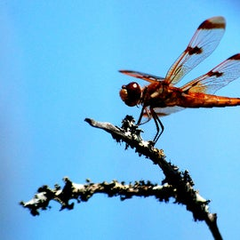I was able to get a closeup of a dragonfly.
