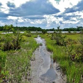 Marsh/Estuary