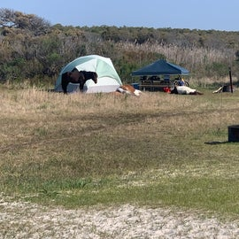 ponies camped out at this poor person's site