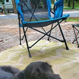 Roxy's first camping trip