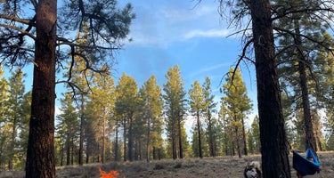 Dispersed Camping in Dixie National Forest
