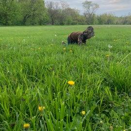 Field behind site 41