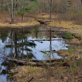 Nearby, Pillsbury State Forest walking trail