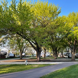 giant beautiful shade trees with sites underneath