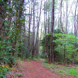 Trail that is at the rear of the camp
