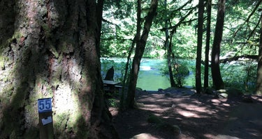 McKenzie River Trailhead at Paradise Campground