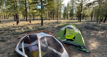 FR117 Dispersed - Dixie National Forest