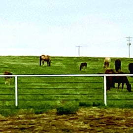 so many young colts