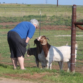 livestock is friendly