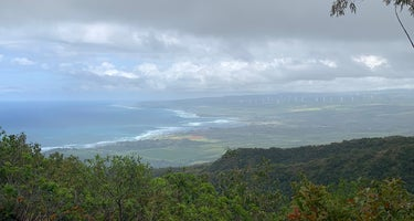 Peacock Flats - Mokuleia Forest Reserve
