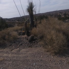 This is kind of how it looks out there you will see beautiful cactus.