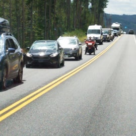 Leaving Yellowstone for Grand Tetons.