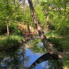 Nature path