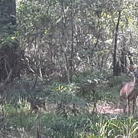 Momma deer and her brand new fawn