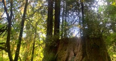 Mill Creek Campground - Del Norte Coast Redwoods State Park