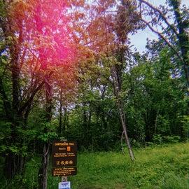 30 minute trail