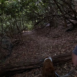 Bear Paw trail  - peaceful!