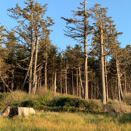 Cape Lookout woods
