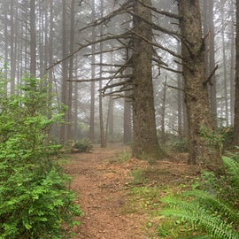 our backyard at Cape Blanco State Park