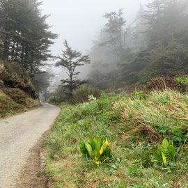 single lane road to beach-Cape Blanco State Park