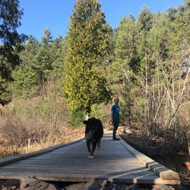hiking trails allow dogs